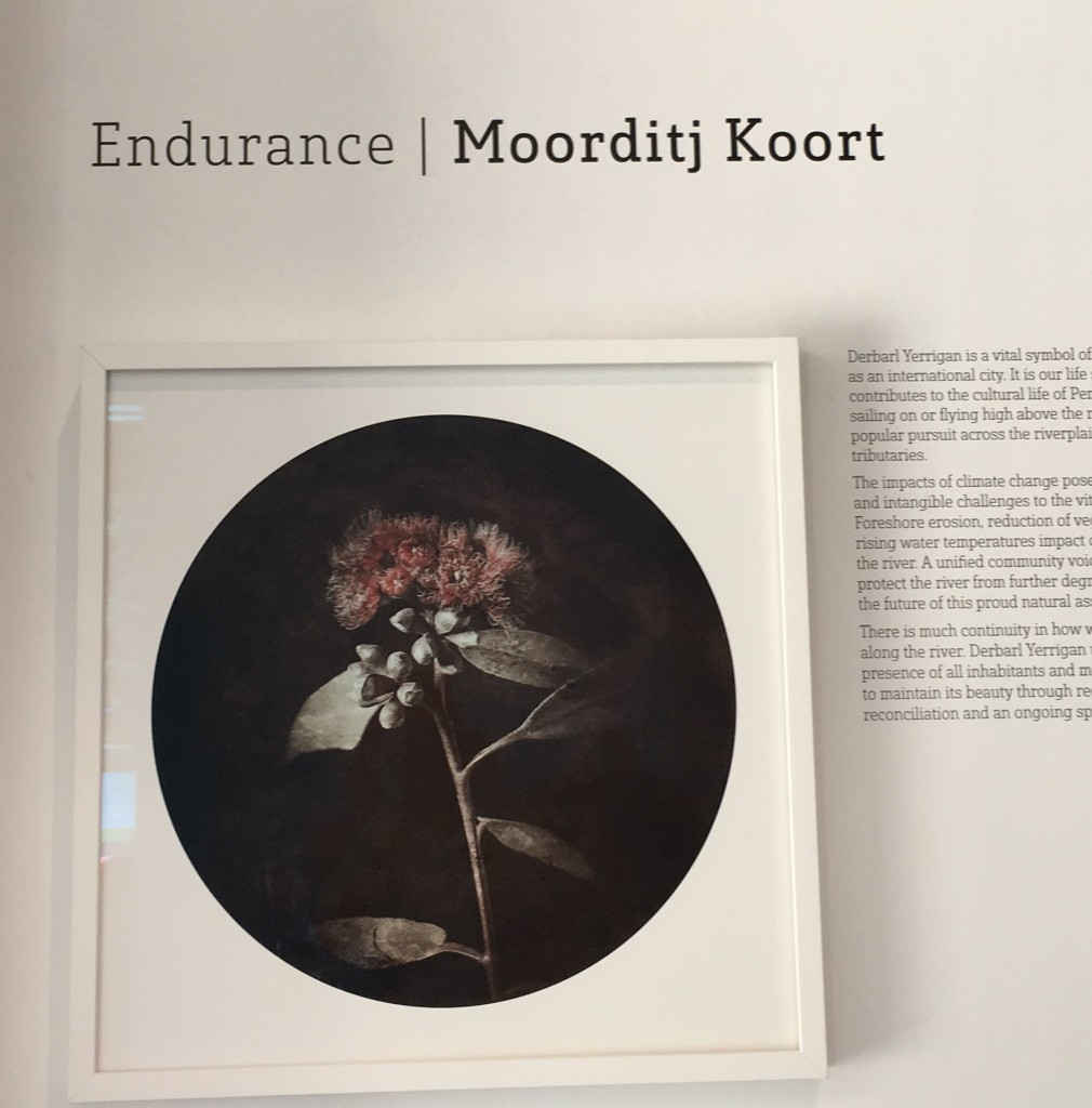 Endurance / Moorditj Koort exhibition heading